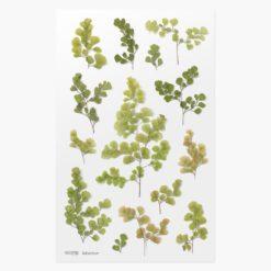 Appree Pressed Flower Stickers - Adiantum