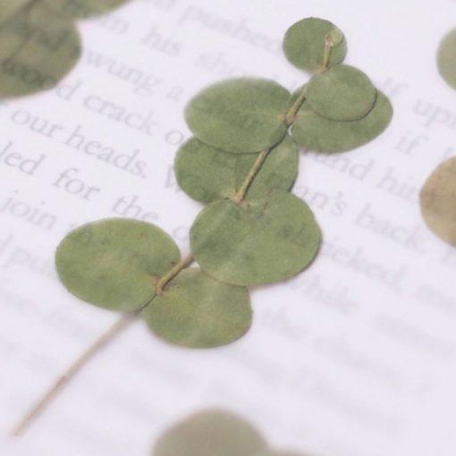 Appree Pressed Flower Stickers - Eucalyptus