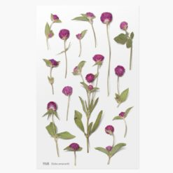Appree Pressed Flower Stickers - Globe Amaranth