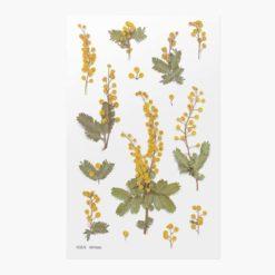 Appree Pressed Flower Stickers - Mimosa