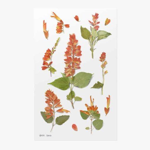 Appree Pressed Flower Stickers - Salvia