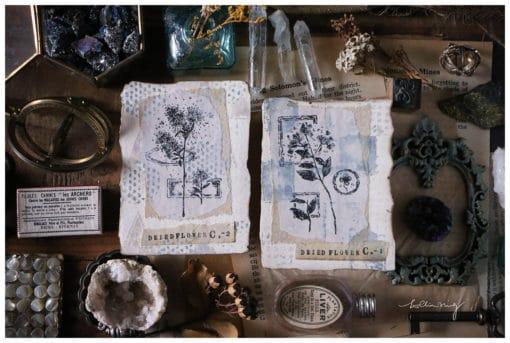 LCN Design Rubber Stamps - Dried Flower, set B