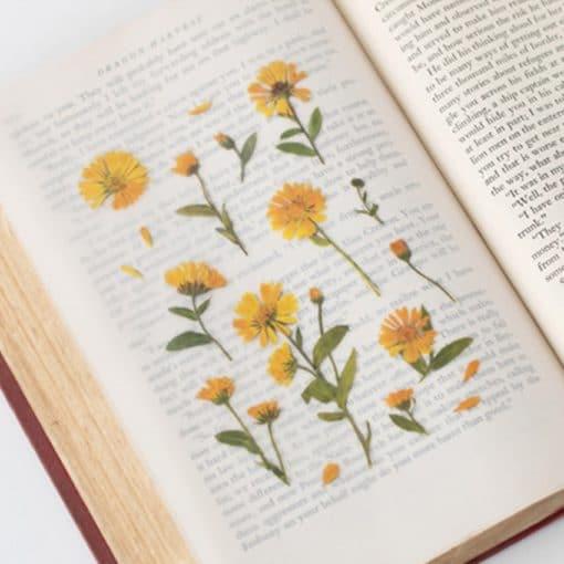 Appree Pressed Flower Stickers - Calendula