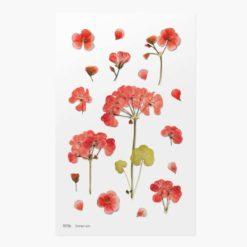 Appree Pressed Flower Stickers - Geranium