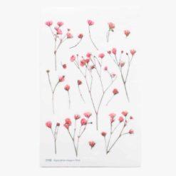 Appree Pressed Flower Stickers - Gypsophila
