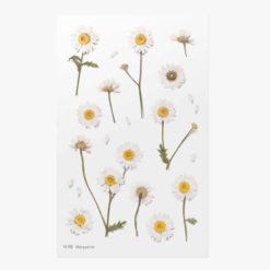 Appree Pressed Flower Stickers - Marguerite
