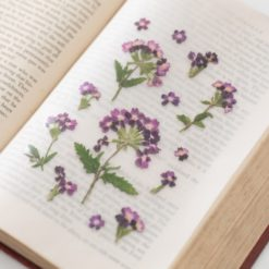 Appree Pressed Flower Stickers - Verbena